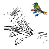 Numbers game, Racket-tail Hummingbird Royalty Free Stock Image