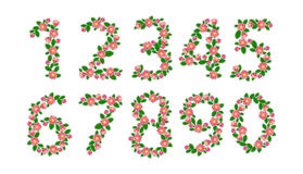 Numbers set. Spring blossom numbers illustration set Stock Image