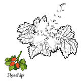 Numbers vector game: fruits and vegetables (roseship) Stock Photo