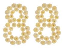 Numeral árabe 88, oitenta e oito, das flores de creme do chrysanth Fotografia de Stock