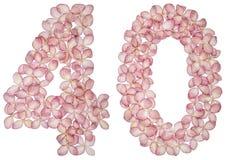 Numeral árabe 40, quarenta, das flores da hortênsia, isoladas no fundo branco fotografia de stock