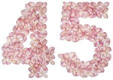 Numeral árabe 45, quarenta e cinco, das flores da hortênsia, isoladas no fundo branco foto de stock