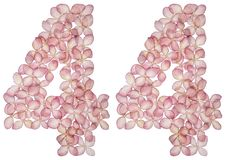 Numeral árabe 44, quarenta e quatro, das flores da hortênsia, isoladas no fundo branco imagens de stock
