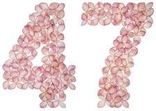 Numeral árabe 47, quarenta e sete, das flores da hortênsia, isoladas no fundo branco foto de stock royalty free