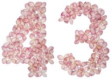 Numeral árabe 43, quarenta e três, das flores da hortênsia, isoladas no fundo branco fotografia de stock