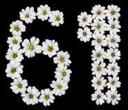 Numeral árabe 61, sessenta um, sessenta, seis, um, da flor branca Imagens de Stock