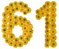 Numeral árabe 61, sessenta uns, das flores amarelas do botão de ouro, Fotografia de Stock Royalty Free