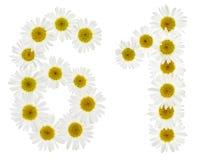 Numeral árabe 61, sessenta uns, das flores brancas da camomila, i Fotos de Stock
