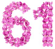 Numeral árabe 61, sessenta uns, das flores da viola, isoladas sobre Fotos de Stock
