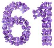 Numeral árabe 61, sessenta uns, das flores da viola, isoladas sobre Foto de Stock Royalty Free
