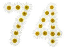Numeral árabe 74, setenta quatro, das flores brancas da camomila Imagem de Stock Royalty Free