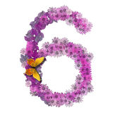 Numeral or number 6. Forms pink daisy color Stock Photos
