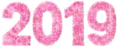 Numeral 2019 from pink forget-me-not flowers, isolated on white. Background Stock Photos