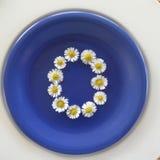 Numere 0, flores brancas no fundo azul Imagem de Stock