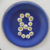 Numere 8, flores brancas no fundo azul fotos de stock royalty free