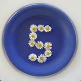 Numere 5, flores brancas no fundo azul foto de stock