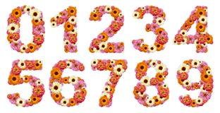 Numeri floreali Immagine Stock