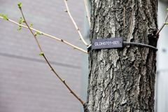 The numerical labels on the tree Stock Photography