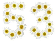 Numero arabo 53, cinquantatre, dai fiori bianchi della camomilla, Fotografia Stock