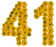 Numero arabo 41, quaranta uno, dai fiori gialli del ranuncolo, Immagine Stock