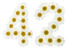 Numero arabo 42, quarantadue, dai fiori bianchi della camomilla, i Fotografia Stock Libera da Diritti