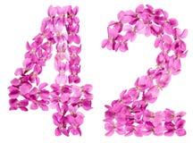 Numero arabo 42, quarantadue, dai fiori della viola, isolati sopra Fotografia Stock
