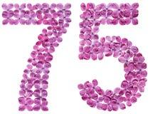 Numero arabo 75, settantacinque, dai fiori del lillà, isolati Fotografia Stock