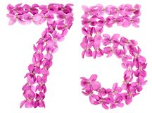 Numero arabo 75, settantacinque, dai fiori della viola, isolati Fotografie Stock
