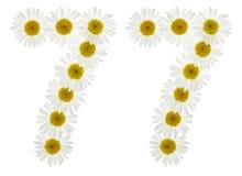 Numero arabo 77, settantasette, dai fiori bianchi di chamomil Immagine Stock Libera da Diritti