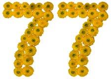 Numero arabo 77, settantasette, dai fiori gialli di butterc Immagini Stock