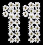 Numero arabo 11, undici, uno, dai fiori bianchi del Cerastium Immagine Stock