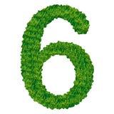 Numero 6 dell'erba Immagini Stock