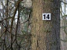 Numero quattordici su un albero Immagine Stock Libera da Diritti