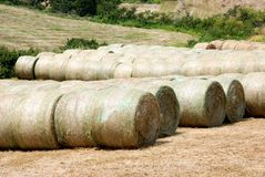 Numerous bales of oat Royalty Free Stock Image