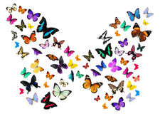 Numerous butterflies royalty free illustration