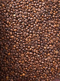 Numerous coffee beans Stock Photography