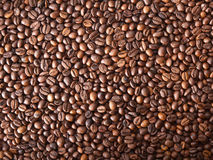 Numerous coffee beans Stock Images