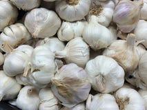 Numerous Garlic bulbs Stock Image