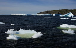 Numerous Icebergs in St. Carol's Royalty Free Stock Photography
