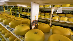 Numerous pieces of cheese being stored at cheese plant. stock video