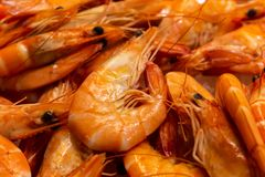 Numerous prawns in the market. Fresh marine food stock photos
