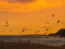 Numerous seagulls flying at sunset over the beach in Lloret de Mar, Spain. Numerous seagulls flying at sunset over the beach in Lloret de Mar, Costa Brava, Spain Stock Photos