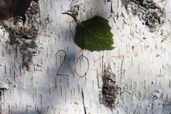 Numerowy nowy rok rzeźbiący na brzozie Fotografia Stock