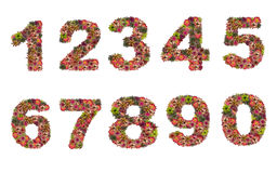 Nummer av bromeliablommor Arkivbilder