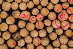 Nummer för fläck för teckning för journal för bråte för snitt för trädstam Fotografering för Bildbyråer