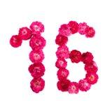 Nummer 16 från blommor av ett rött och rosa steg på en vit bakgrund Arkivfoto