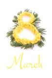 Nummer 8 från mimosa Royaltyfri Fotografi