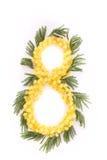 Nummer 8 från mimosa Arkivbild