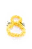 Nummer 8 från mimosa Royaltyfria Foton