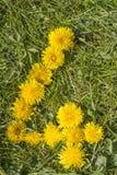 Nummer fyra som är utdraget med maskrosen på gräsmattan Royaltyfri Fotografi